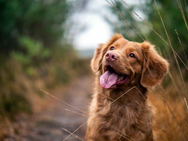 Aktivera hunden