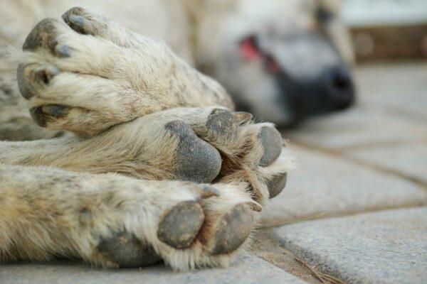 Klippa klor hund – vad ska jag tänka på?